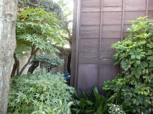緑豊かな玄関先.JPG